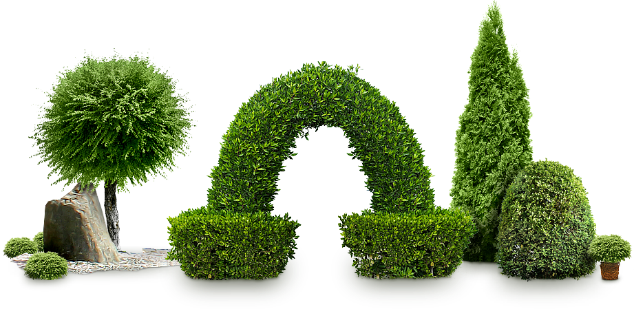Bushes images free download. Hedge png jpg free stock