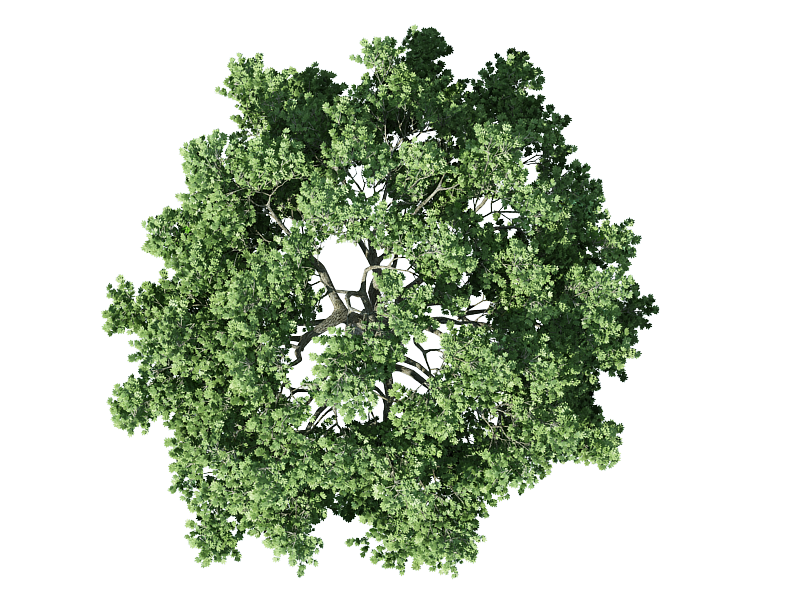plan view trees png