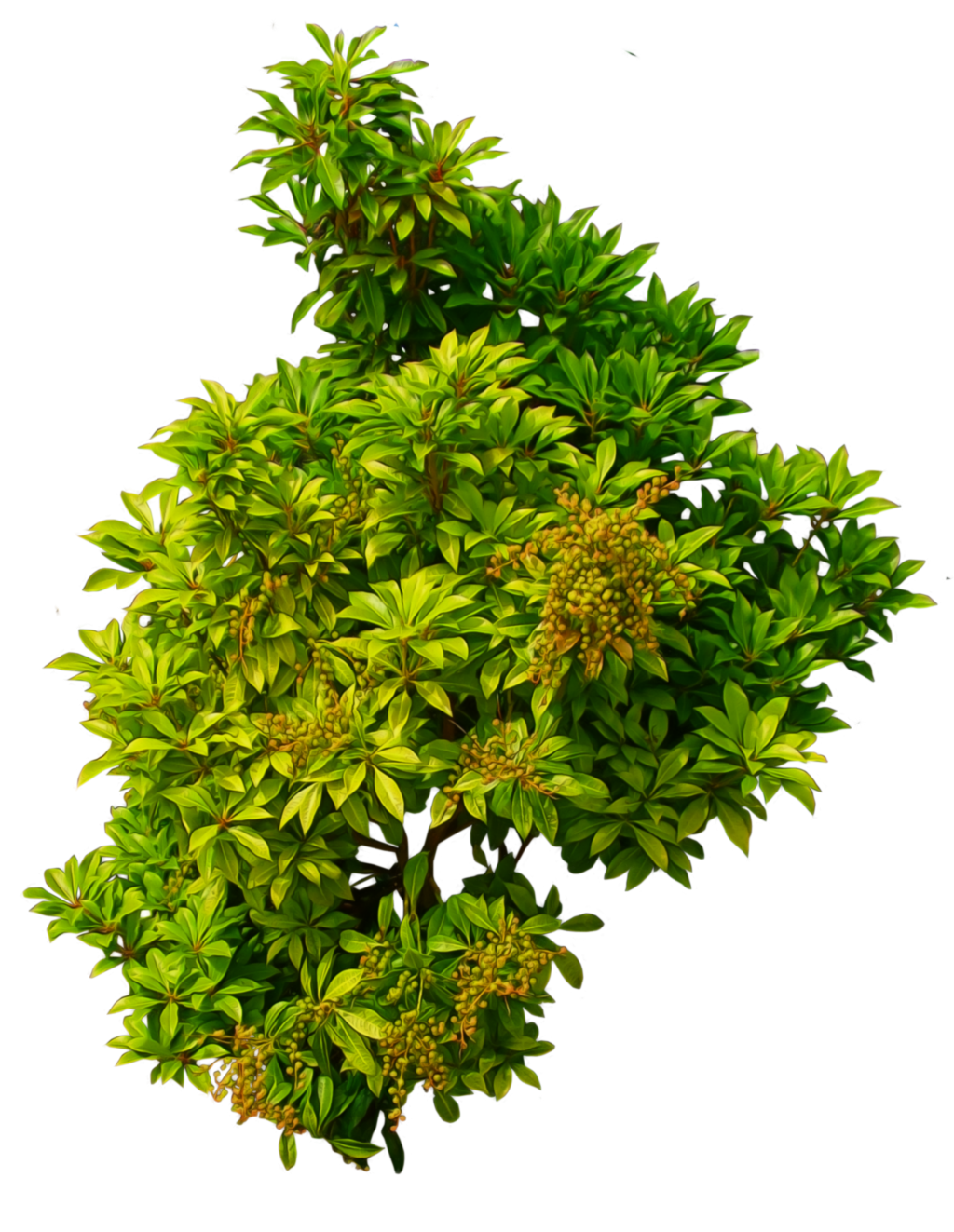 Bushes plan view png. Shrub by alz stock