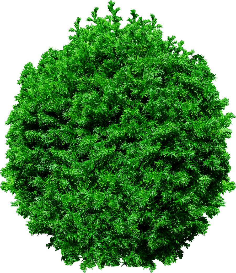 Bushes .png. Top tree transparent png