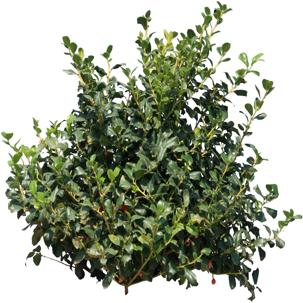 Bushes png. Images free download bush