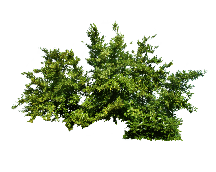 Bushes png. Bush free images toppng