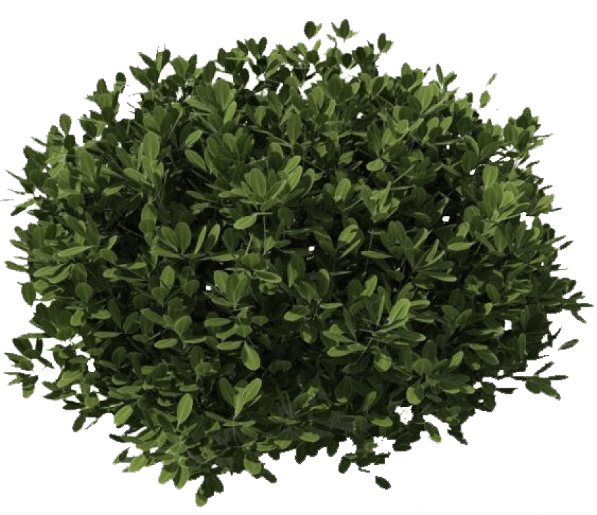 Bushes png. Free images toppng transparent