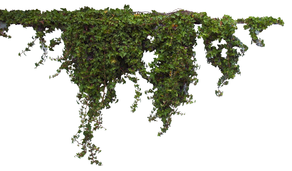 Hanging vines png