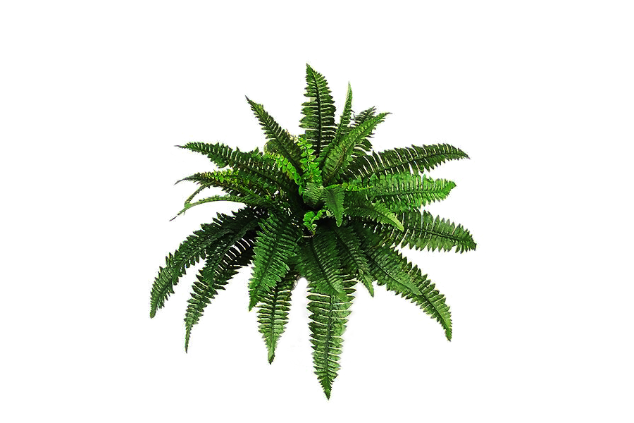 Plant hd transparent images. Bushes png files clipart royalty free stock