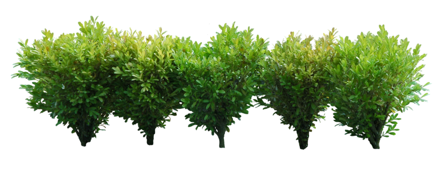 Bushes .png. Png images free download