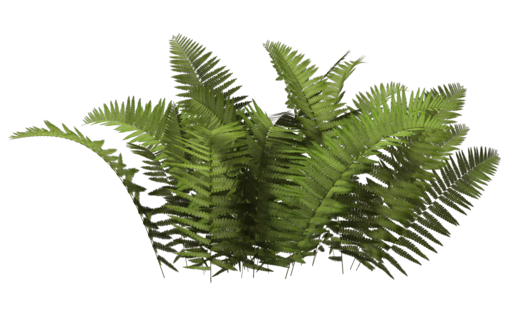 Bushes png images. Clipart web icons download