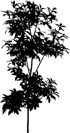 Bushes silhouette png. Plant image