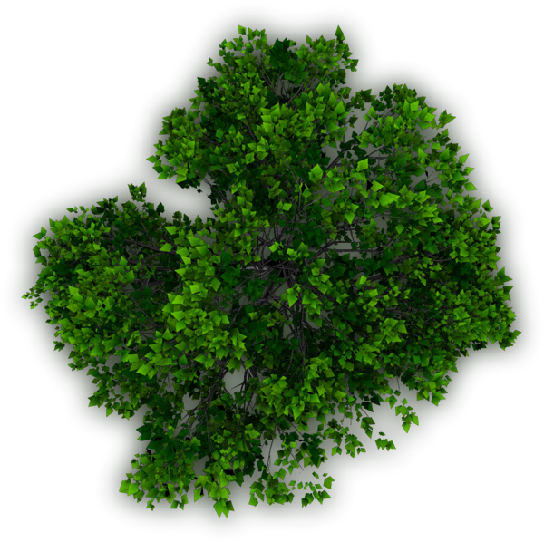 Bushes top view png. Photoshop trees plan araby