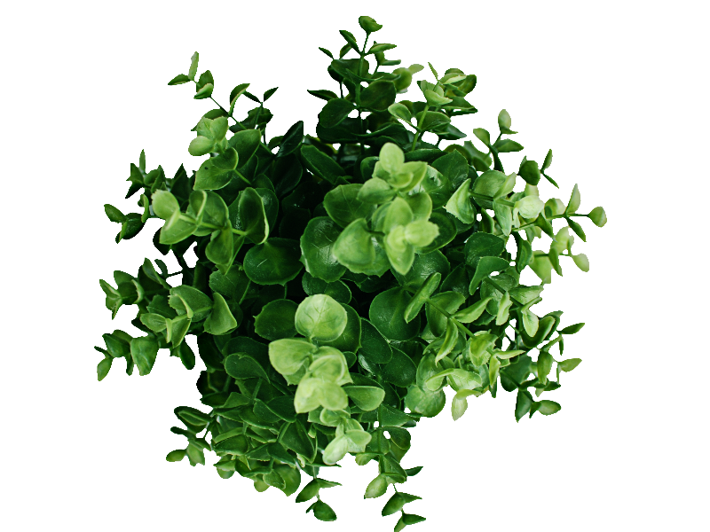 Green plants png. Plant top view image