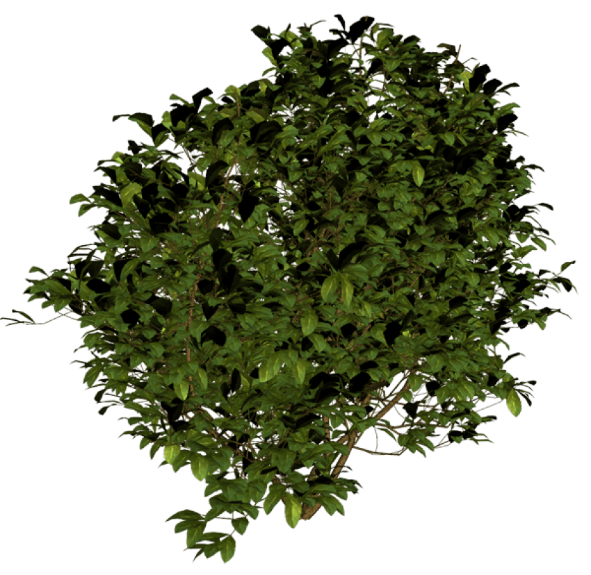 Bushes top view png. Bush free images toppng
