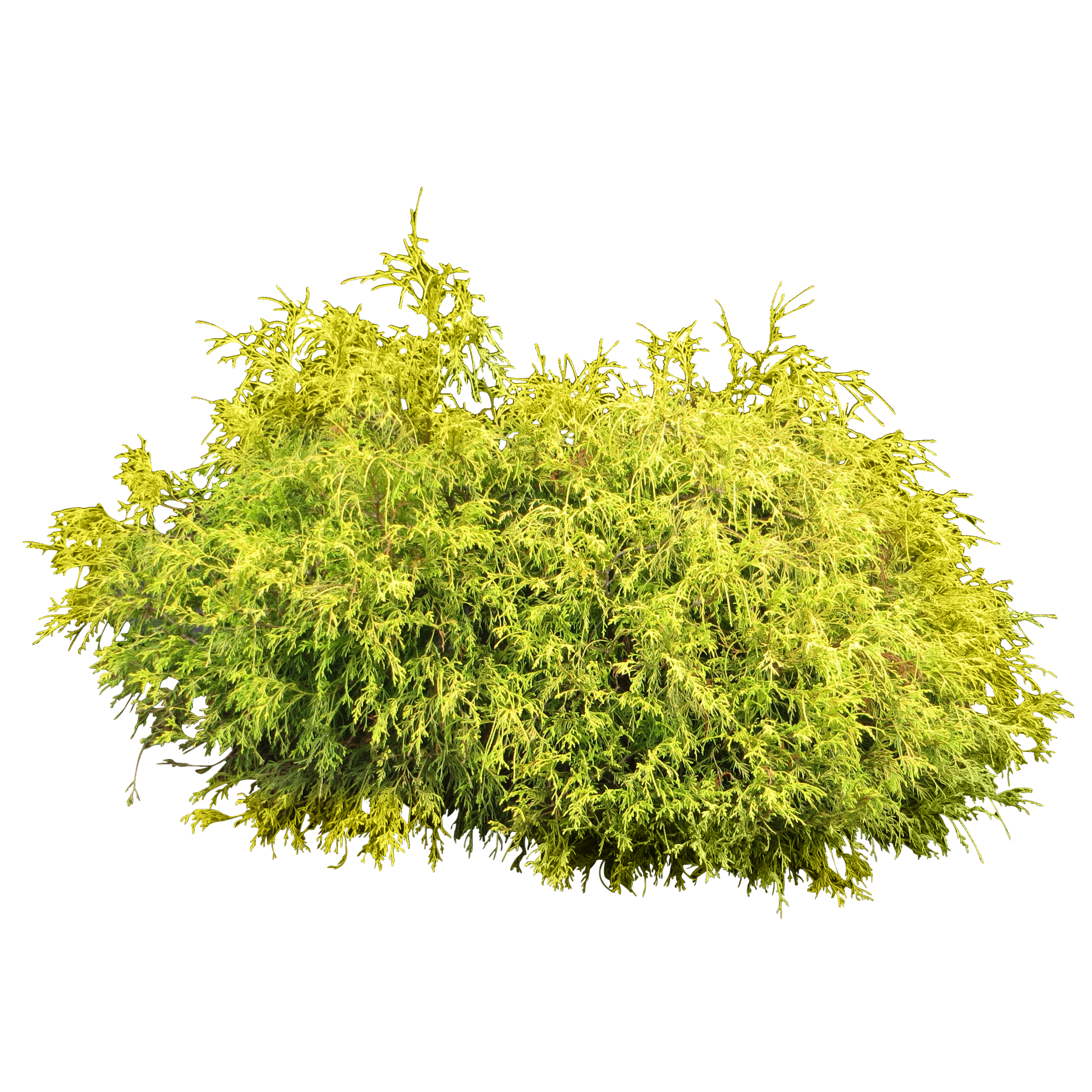 Shrubs silhouette png. Pin by chi kong