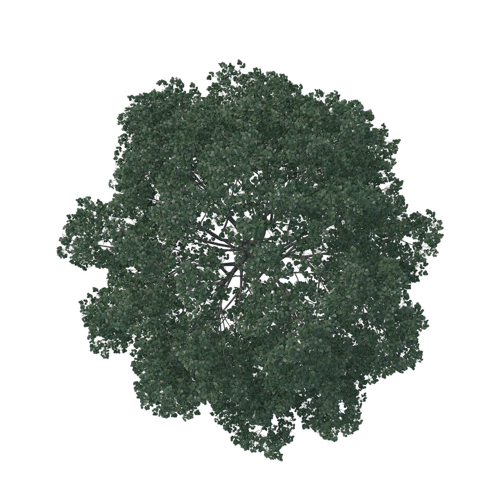 Pine tree top view png. Pin by diamond cappy