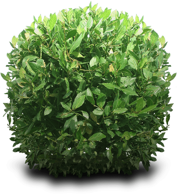 Bushes transparent background png. Bush round stickpng clip library library