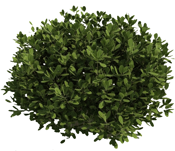 Bushes png. Transparent background free icons
