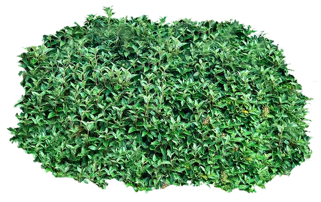 Bushes transparent background png. Pictures free icons and