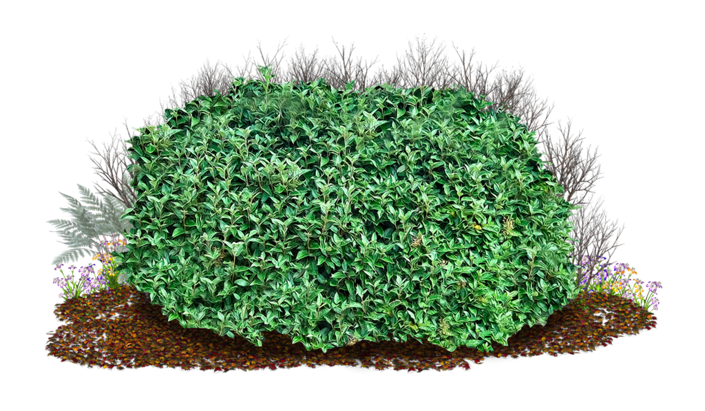boxwood hedge shrubs artificial png