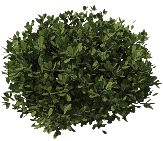 Bushes transparent background png. Images free download pngmart jpg free library