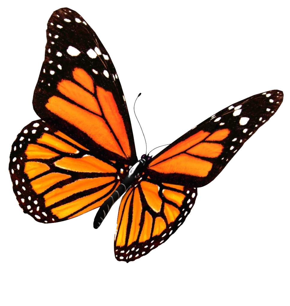 Butterflies flying png. Transparent image mart