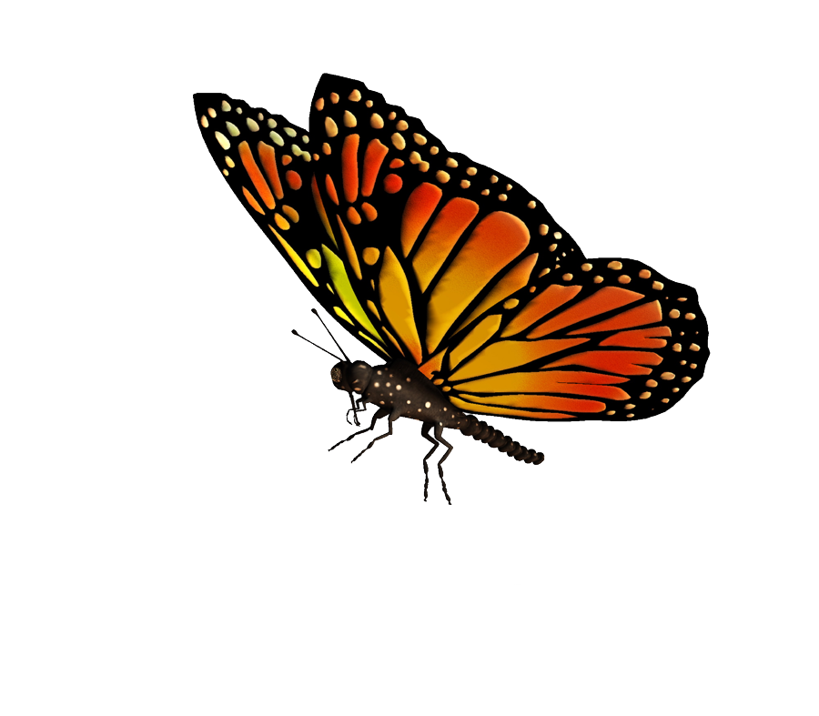Butterflies flying png. Transparent mart