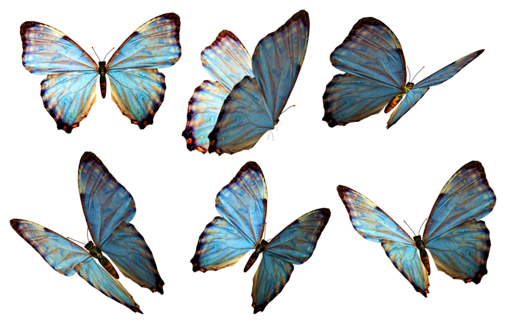 Png butterflies. Stock by roy d