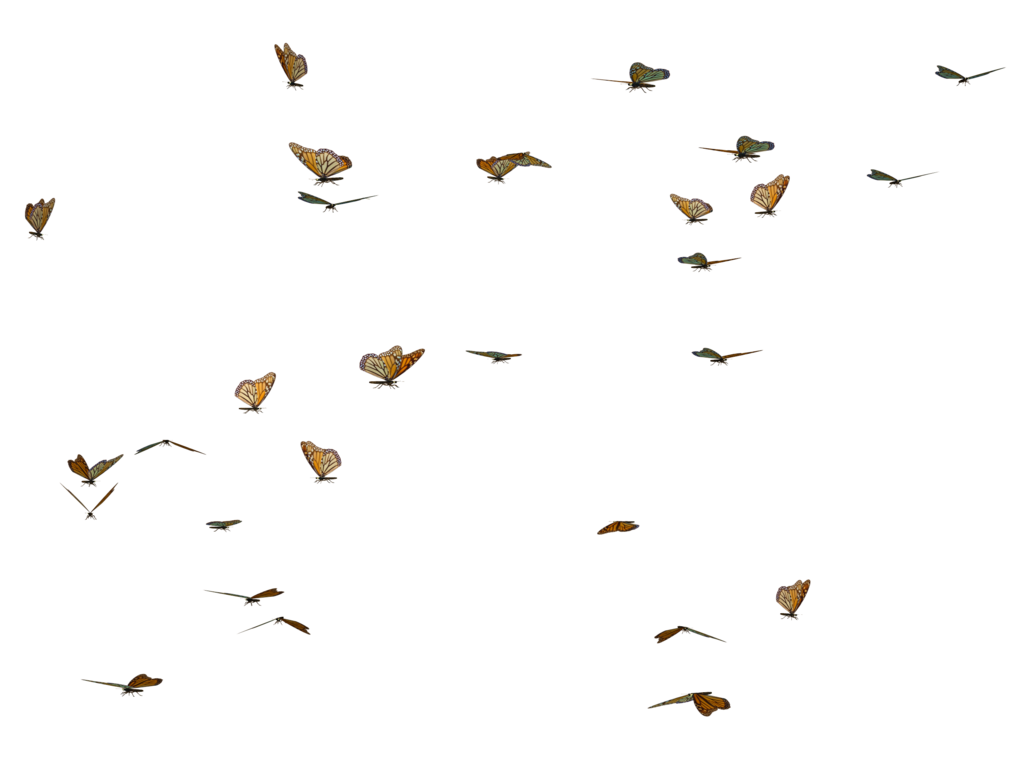 Butterflies png. Butterfly swarm stock by
