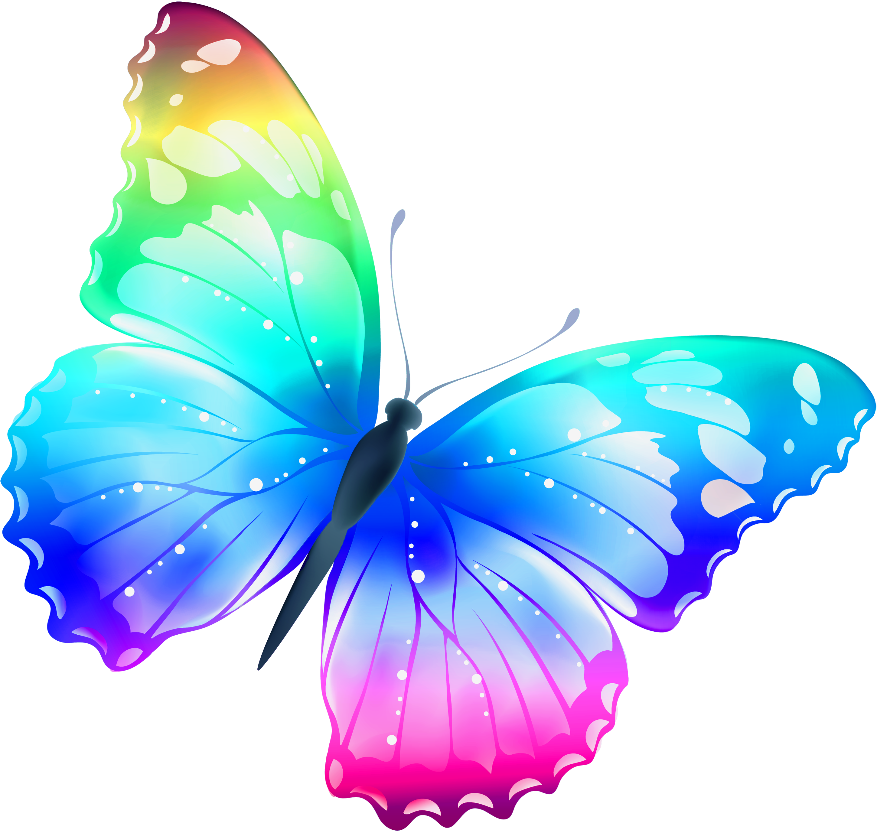 Butterflies png transparent. Large multi color butterfly
