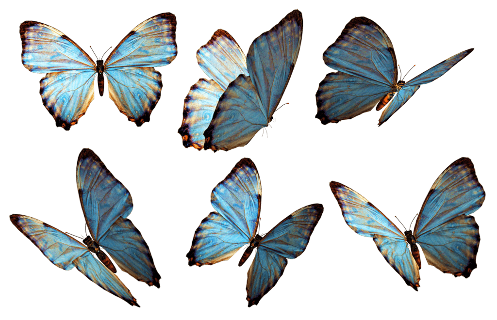 Butterflies transparent png. Group blue stickpng