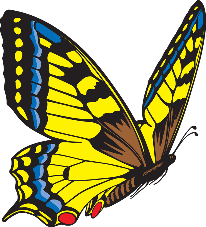 Photo clipart butterfly. Yellow panda free images