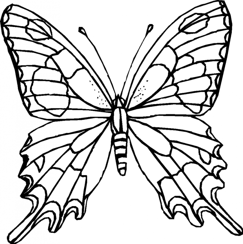 Butterfly clip art black and white. Clipart of butterflies lemonize