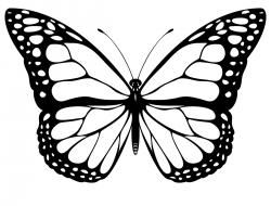 Butterfly clip art black and white. Clipart google search smart