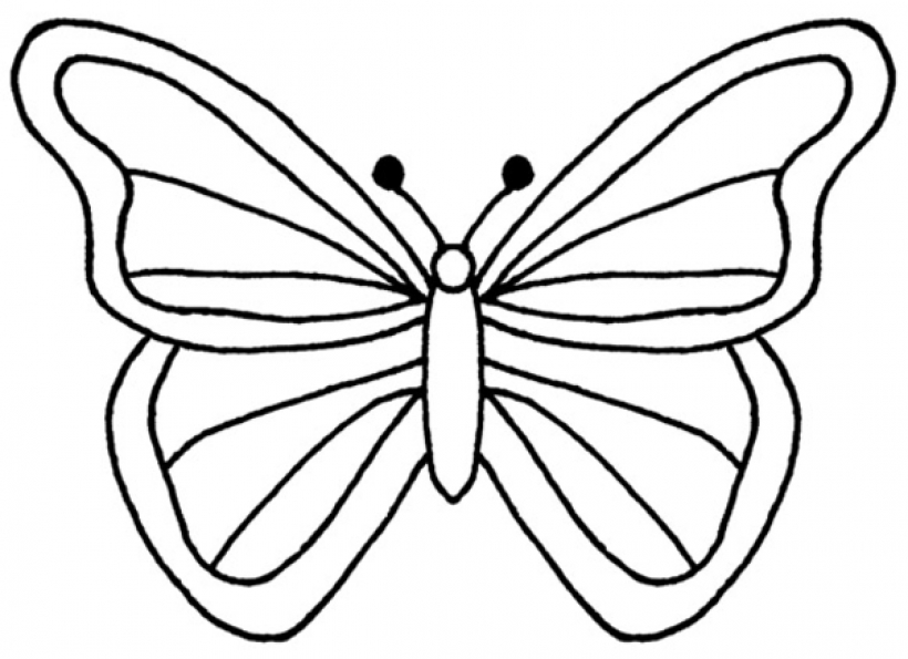 Butterfly clip art butterfly outline. Of a image free