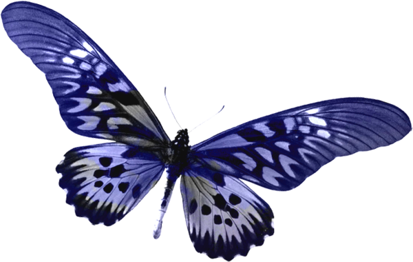 Butterfly clip art clear background. Blue transparent clipart gallery
