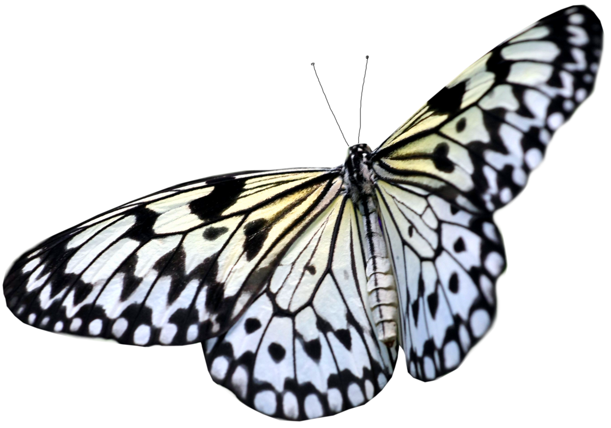 Butterfly clip art clear background. Transparent png pictures free