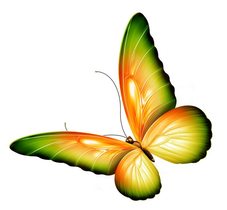 Butterfly clip art clear background. Flowers and butterflies clipart