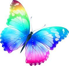 Butterfly clip art colourful. Beautiful water color in