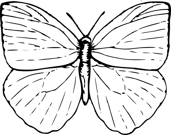 Butterfly clip art line drawing. Of at getdrawings com