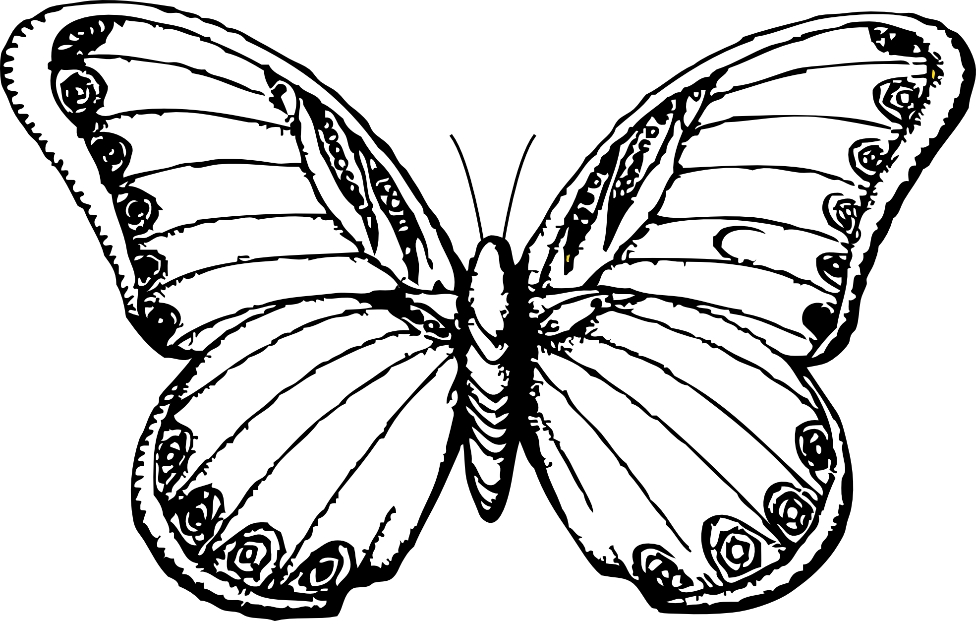 Butterfly clip art line drawing. Free drawings of butterflies