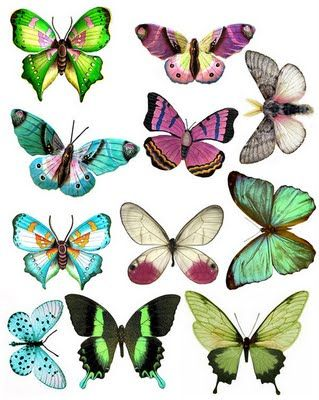 Funky butterflies from what. Butterfly clip art printable image free stock