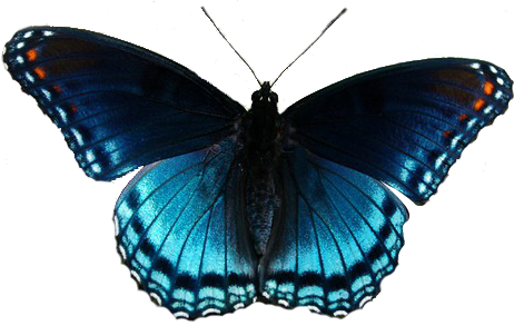 Butterfly clip art realistic. Group with items clipart