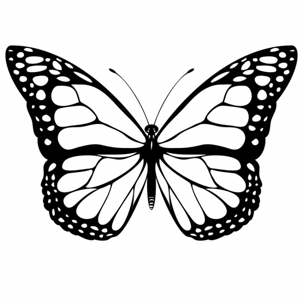 Pencil drawing of at. Butterfly clip art realistic jpg black and white stock