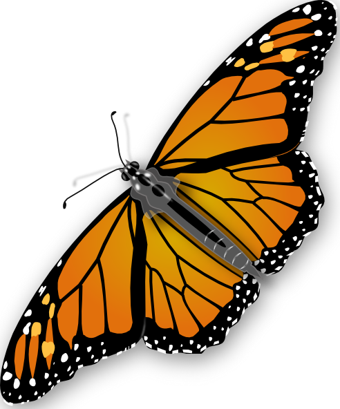 Monarch library real cliparts. Butterfly clip art realistic jpg black and white download
