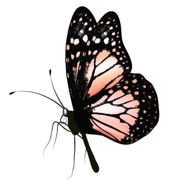 Butterfly clip art realistic. Gallery butterflies png