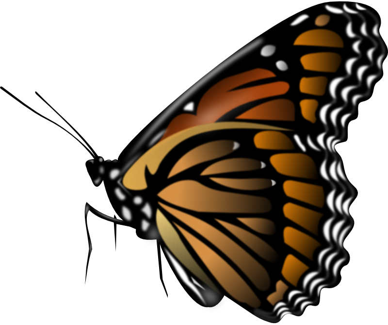 Butterfly clip art small butterfly. Monarch animation