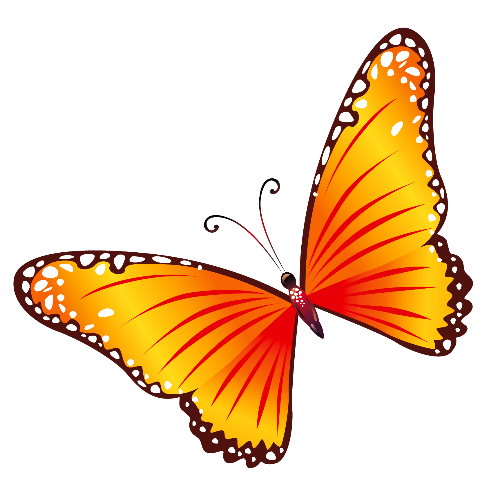 Butterfly clip art transparent background. Orange png clipart gallery