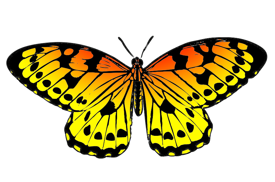 Drawing spring butterfly. Clipart black and orange