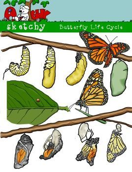 Caterpillar life dpi color. Cycle clipart butterfly png royalty free stock