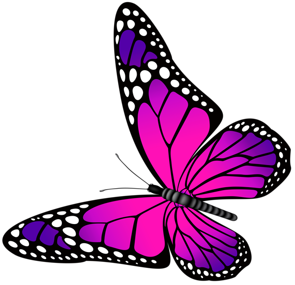 Butterfly clipart png. Pink and purple transparent
