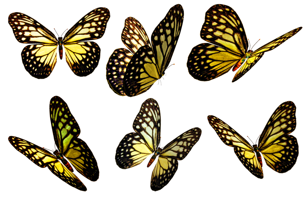 Butterfly flying png. Butterflies transparent pictures free