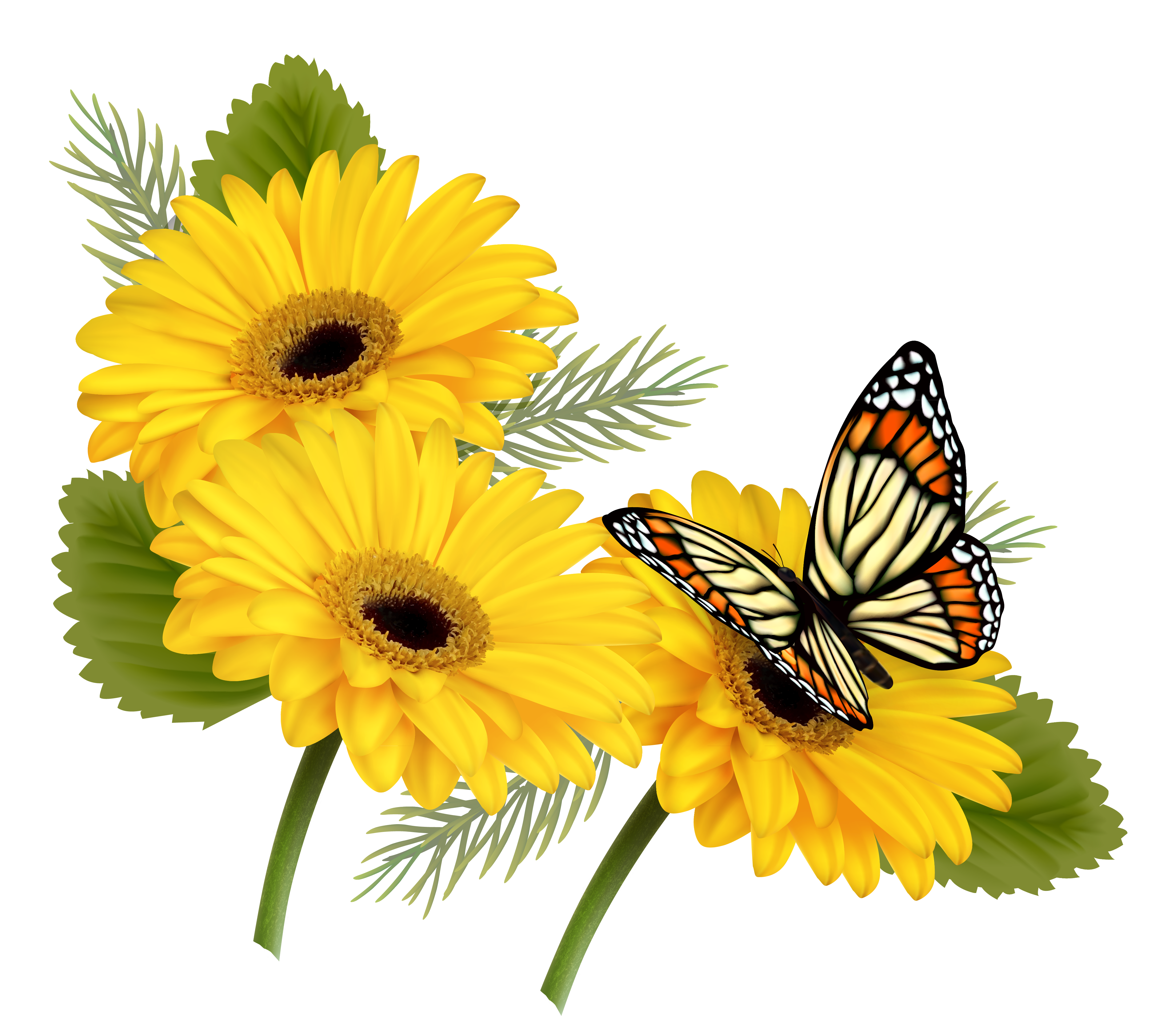 Butterfly on flower png. Yellow gerberas with clipart